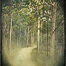 roady by nessbloo