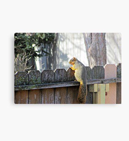 Curious Neighbor Metal Print