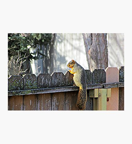 Curious Neighbor Photographic Print
