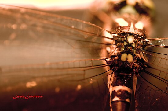 Dragonfly by Laura Lawrence by Laura Lawrence