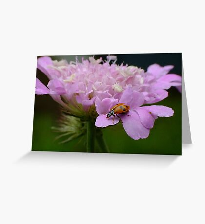 Pretty Ladybird Greeting Card