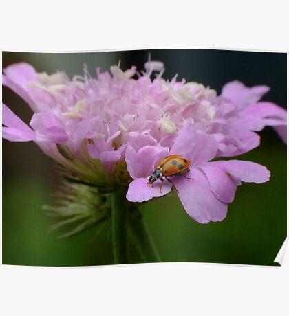 Pretty Ladybird Poster
