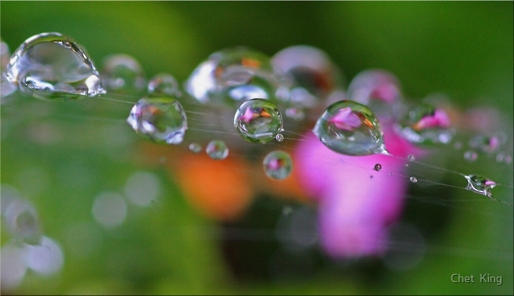 Garden Pearls by Chet  King