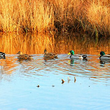 Ducks in a Row by Nazareth