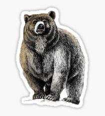 The Great Bear - A fierce protector Sticker