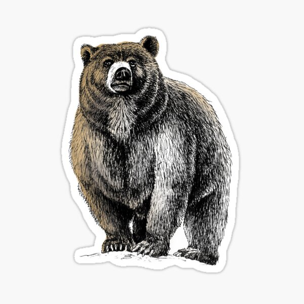 Bear wall decal Set of 10 grizzly Black brown bears Cabin themed Woods stickers