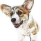 Corgi Puppy by Sarah Guiton