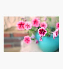 Pink Patunia Photographic Print