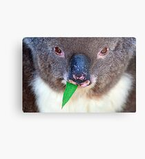Chewing Gum Metal Print