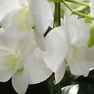 Orchid #3 by PB-SecretGarden