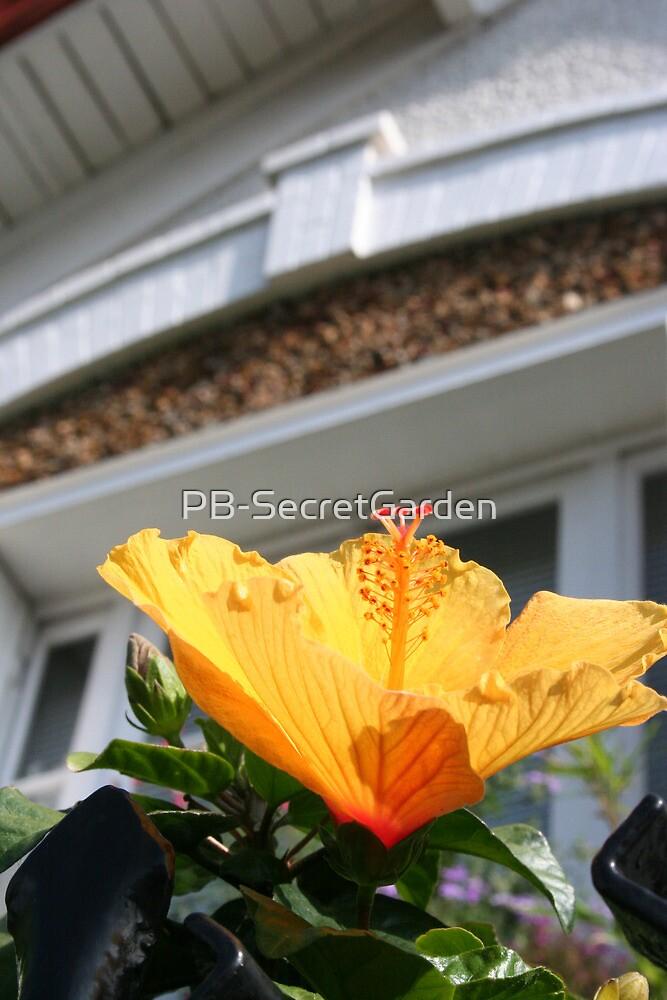 Hibiscus by PB-SecretGarden