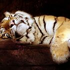 Can't you see I'm trying to get my beauty rest? von vigor