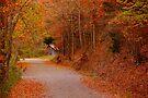 Falling Water Falls Road by NatureGreeting Cards ©ccwri