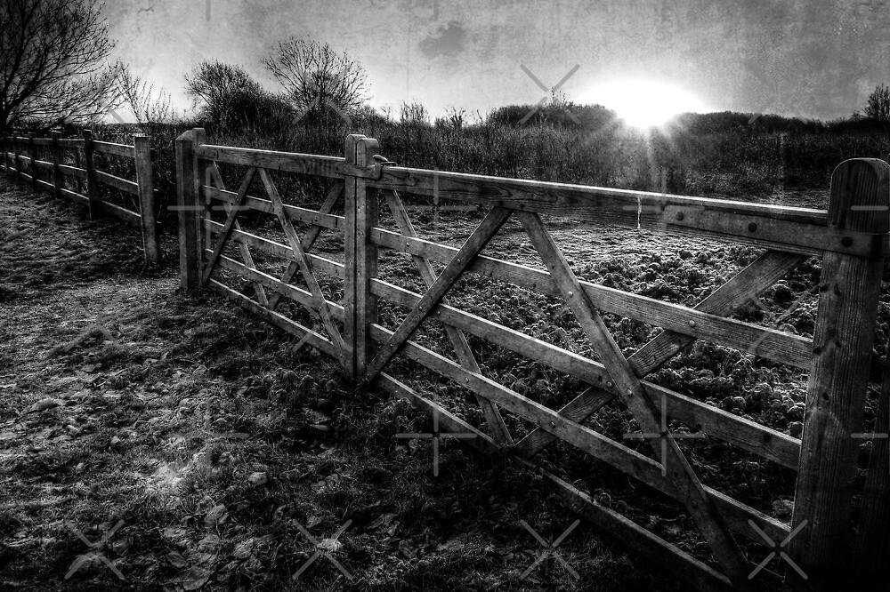 Meadow Gate by Kim Slater