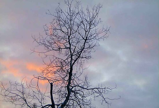 Lonely Tree in the Sunrise Clouds by MaeBelle