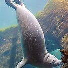 Harbor Seal by JagiShahani