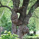 The tree with many growths by Penny Fawver