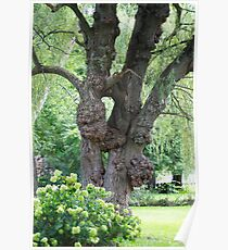 The tree with many growths Poster