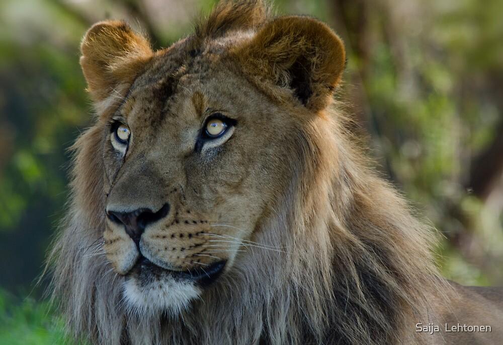 Lion King  by Saija  Lehtonen