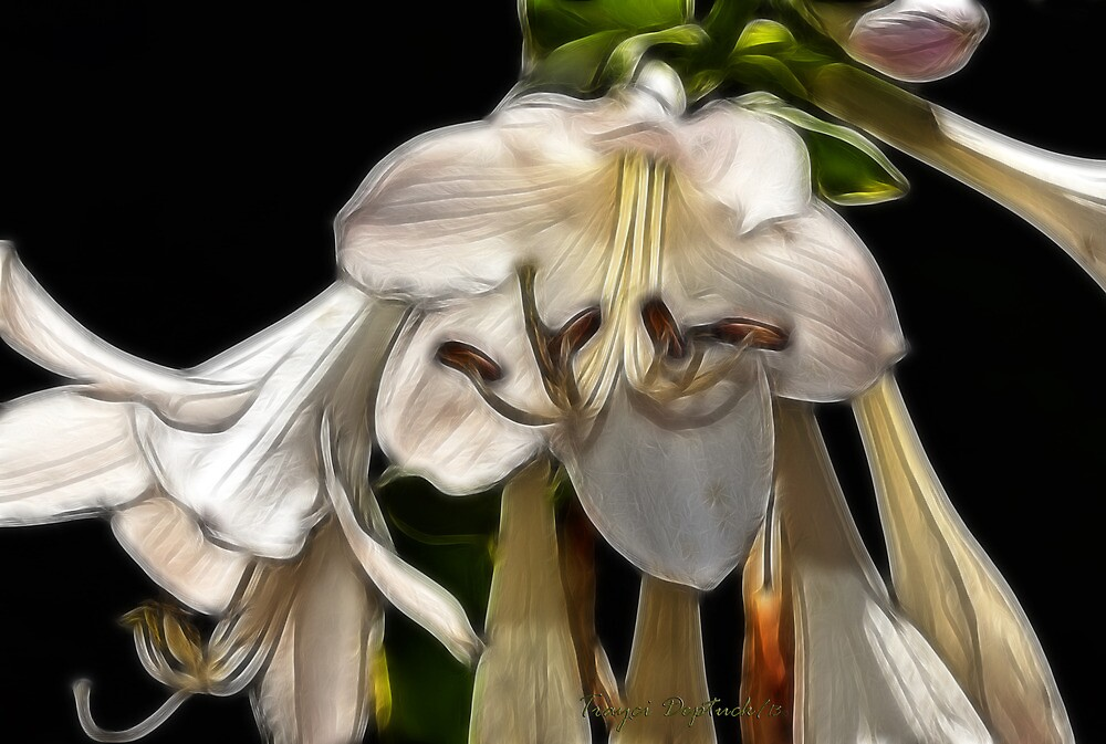 Heaven's Trumpets by Creative Captures