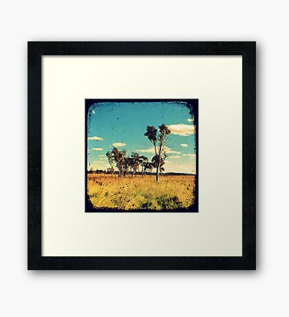 Eucalyptus Trees Through The Viewfinder (TTV) Framed Print