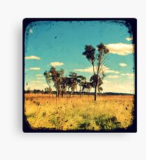 Eucalyptus Trees Through The Viewfinder (TTV) Canvas Print