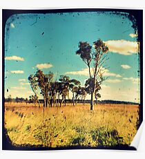 Eucalyptus Trees Through The Viewfinder (TTV) Poster