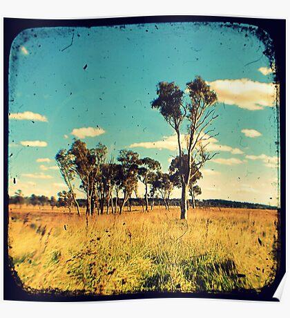 Eucalyptus Trees Through The Viewfinder (TTV) Poster