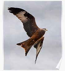 Red Kite Soaring in Sky Poster