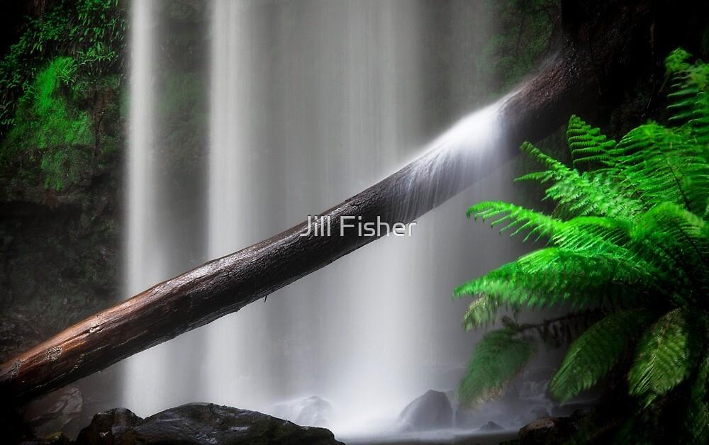 Rainforest Waterfall by Jill Fisher