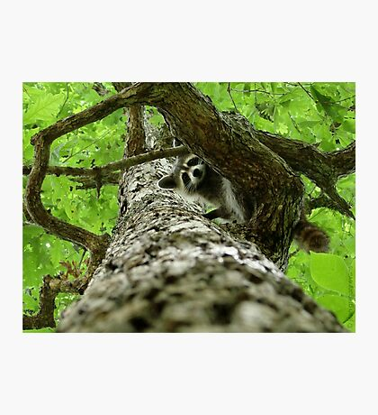 Taking Tree Climbing to the Next Level Photographic Print