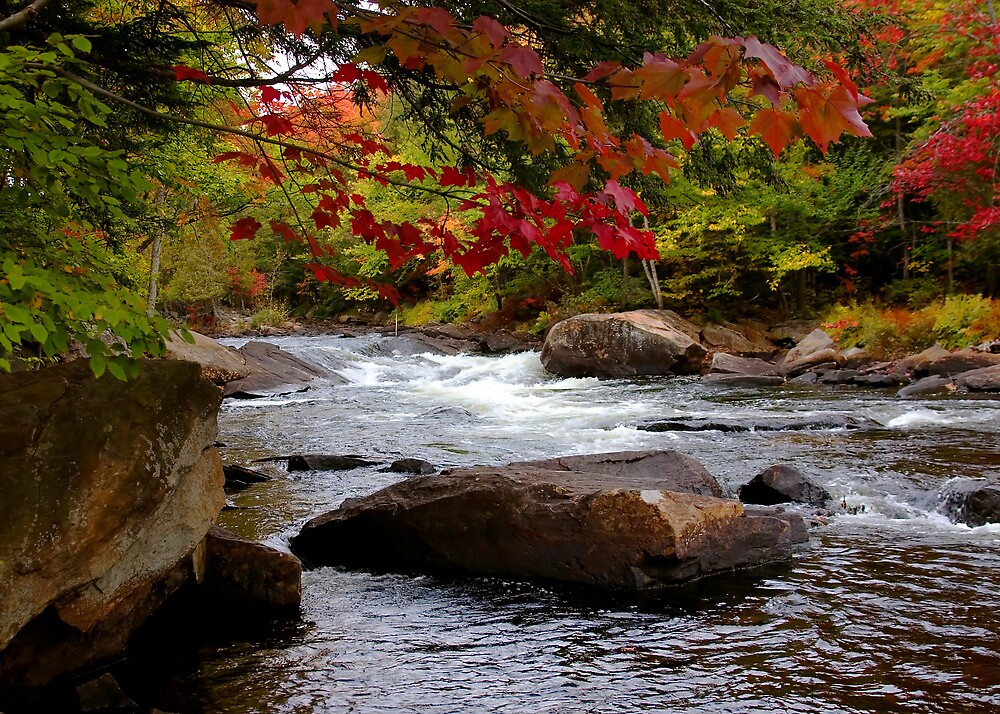 Canada - Fall Colours Ox Tongue River by Pat Speirs