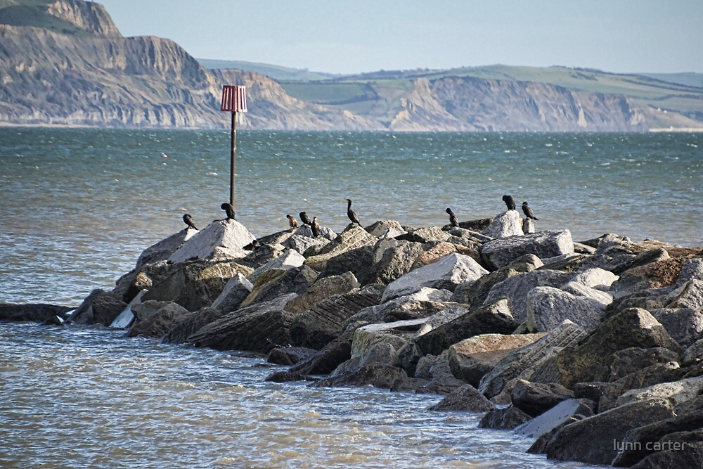 Cormorants Rock by lynn carter