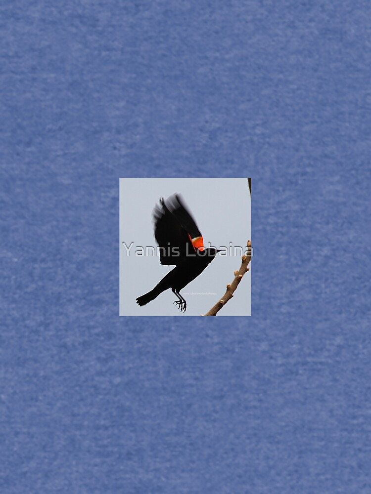 Fly high, dear Red winged blackbird By Yannis Lobaina by lobaina1979