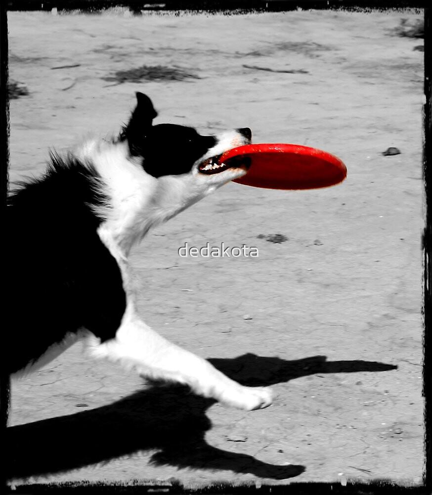 Dog Frisbee by dedakota