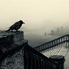 Bird's eye view by Trish  Anderson