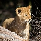 On The Prowl by Steve Randall