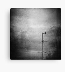 Black dove Canvas Print