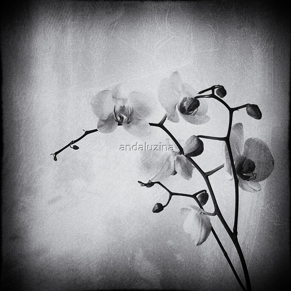 White petals by andaluzina