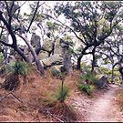 Magnetic Island, Queensland, Australia by Adrian Paul