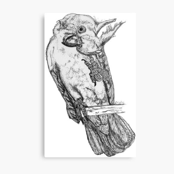 Frisky the Cockatoo Metal Print