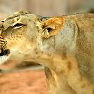 Roarie - the roaring cub by redscorpion