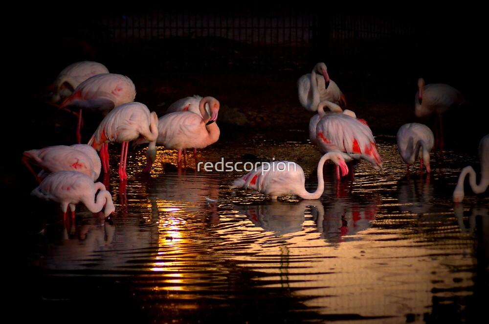 An evening dip in the sun by redscorpion