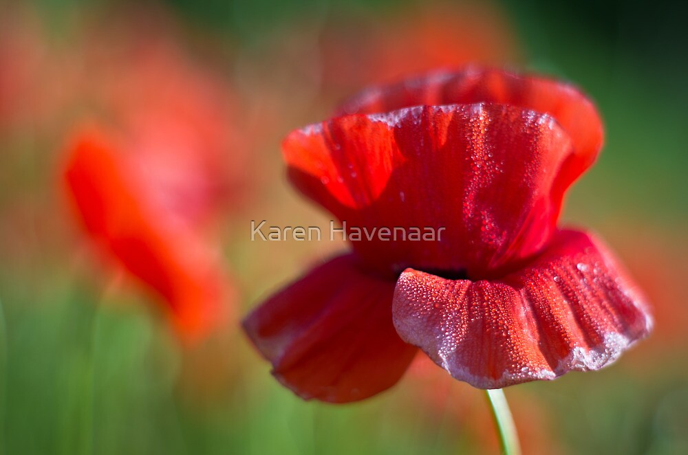 Fading Beauty by Karen Havenaar