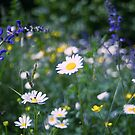 Field of flowers by Karen Havenaar