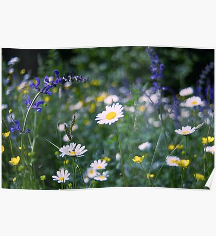 Field of flowers Poster