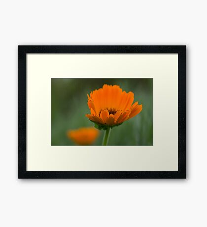 Orange & Green Framed Print