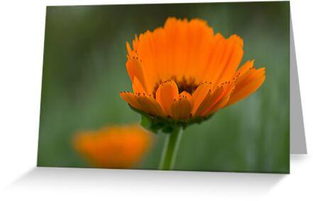 Orange & Green by Karen Havenaar