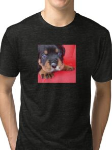 Comical Rottweiler Puppy With Food On Snout Tri-blend T-Shirt