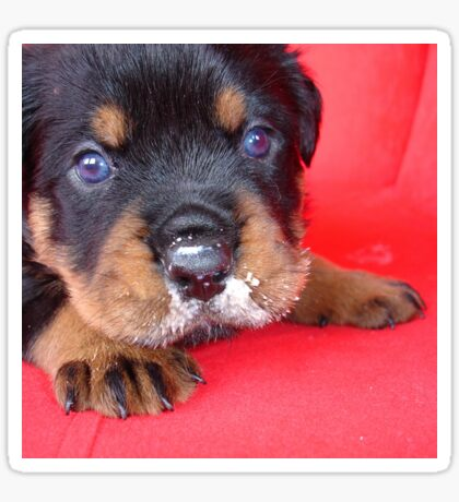 Comical Rottweiler Puppy With Food On Snout Sticker